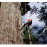 美國 samson WHOOPIE SLINGS 攀樹可調式繫木基底繩 18mm
